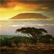 salg af Mountain Kenya AA